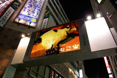 ヨウカンさん、渋谷デビュー!【3/24動画追加しました】_a0028451_2473391.jpg