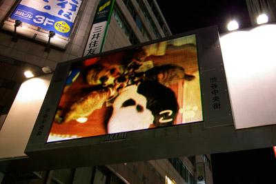 ヨウカンさん、渋谷デビュー!【3/24動画追加しました】_a0028451_2474652.jpg