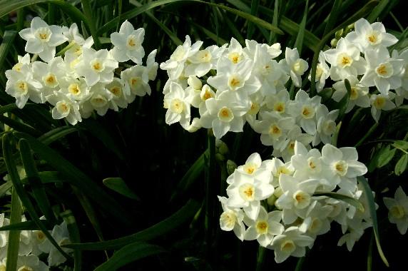 春はそこまで_b0093754_0101450.jpg