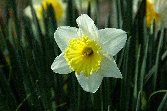春はそこまで_b0093754_010448.jpg
