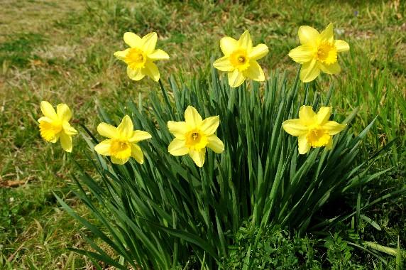 春はそこまで_b0093754_093796.jpg