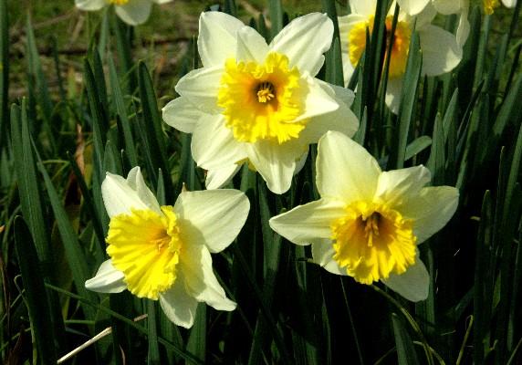 春はそこまで_b0093754_095594.jpg