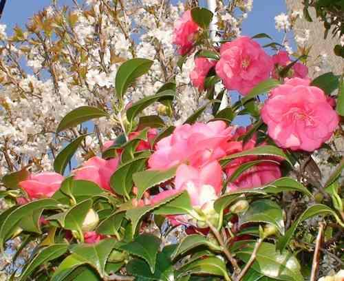 白鶴美術館周辺散策             2008年3月23日_d0083265_165479.jpg