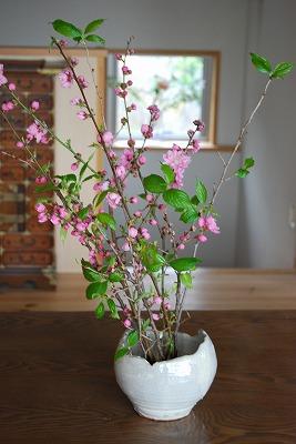 桃の花をいただいた_c0124100_17101713.jpg