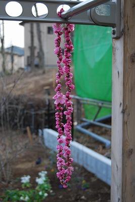 桃の花をいただいた_c0124100_17103198.jpg