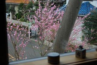 桃の花をいただいた_c0124100_1710353.jpg