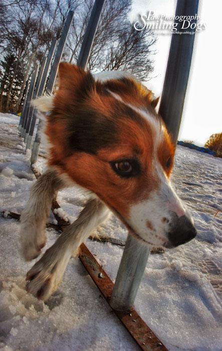 AGILITY DOG?_f0116805_20223162.jpg