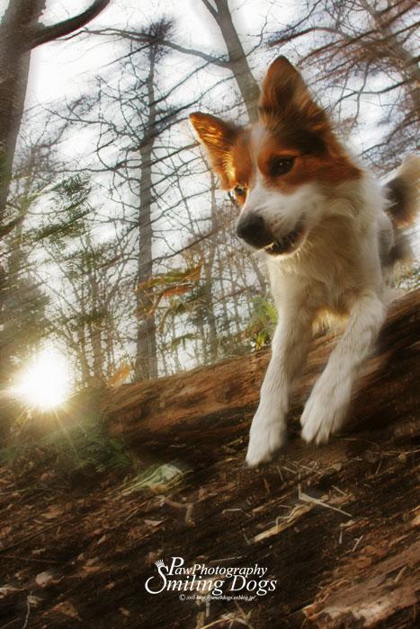 AGILITY DOG?_f0116805_20224451.jpg