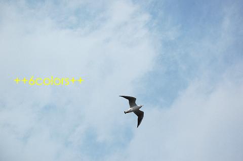 e0125310_137444.jpg