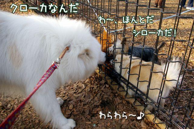 開花宣言_c0062832_17181927.jpg