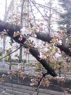 Spring has come_c0076939_223712.jpg