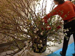 花展の準備で大忙し・準備風景_e0109554_14383624.jpg