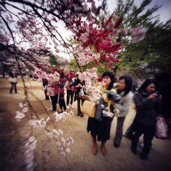 春を撮る 新宿御苑 Pinhole Photography_f0117059_20154565.jpg