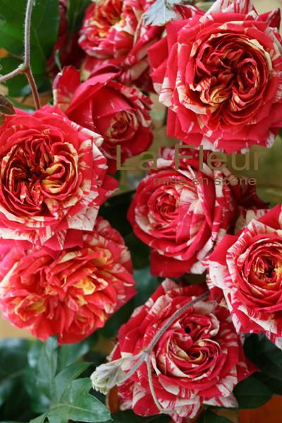 roses_f0127281_23514649.jpg