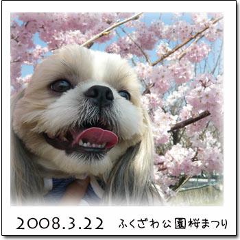 b0024183_1558675.jpg
