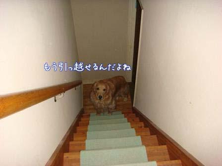 f0064906_218577.jpg
