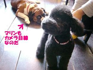 ニュースで桜の開花_e0141978_0264015.jpg