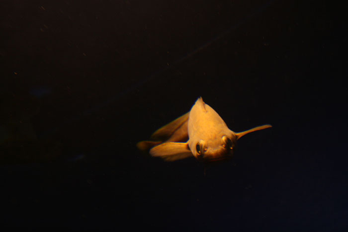 ☆特集 深海に学ぶ file.02: 『深海魚は赤い?』_a0012103_80998.jpg