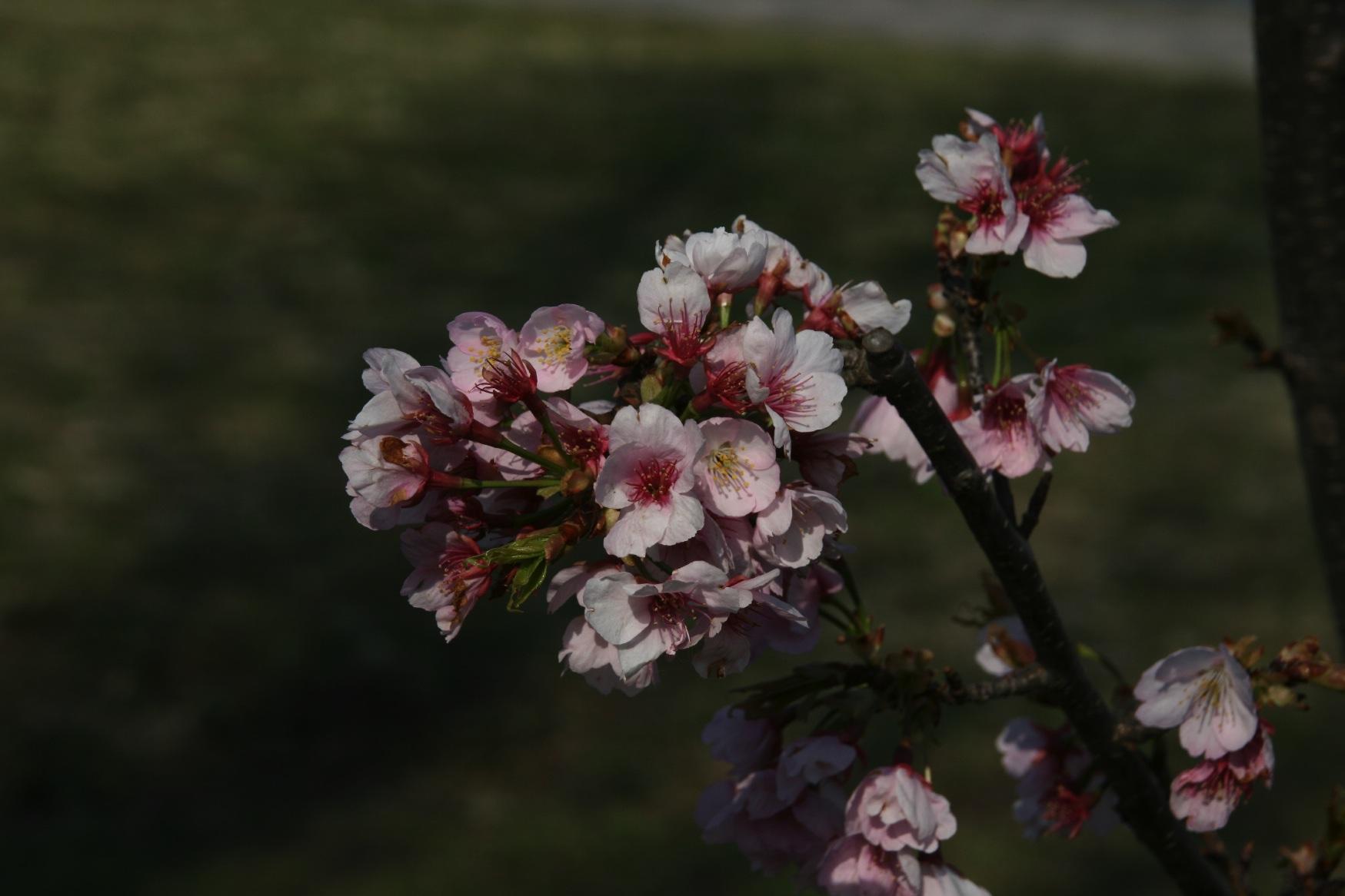 春の訪れ…_f0141609_182444.jpg