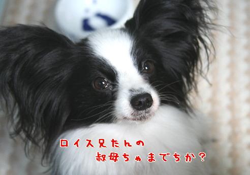 d0013149_1033256.jpg