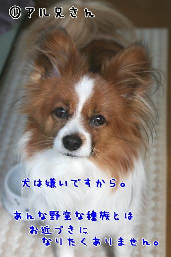 d0013149_10461119.jpg