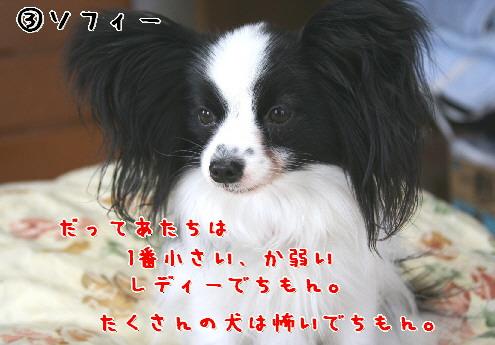 d0013149_10523819.jpg