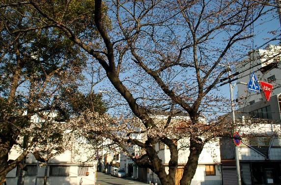 春の便り_b0093754_0313482.jpg