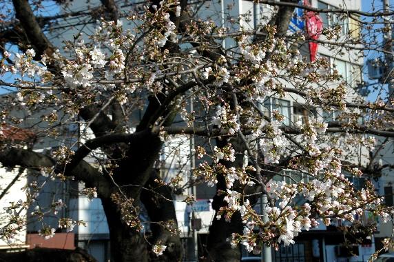 春の便り_b0093754_0314649.jpg
