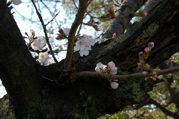 春の便り_b0093754_0315538.jpg