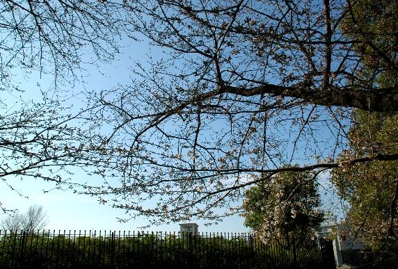 春の便り_b0093754_0321498.jpg