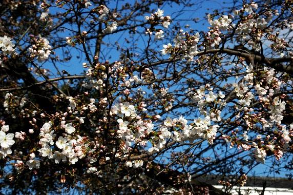 春の便り_b0093754_032519.jpg