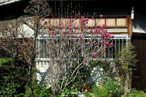 春の便り_b0093754_23501712.jpg
