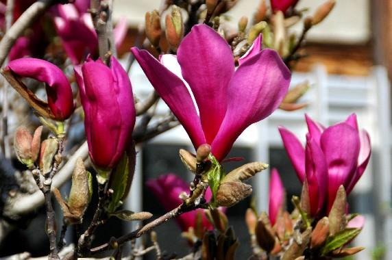 春の便り_b0093754_23503999.jpg