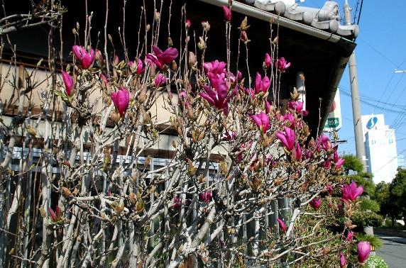 春の便り_b0093754_23505935.jpg