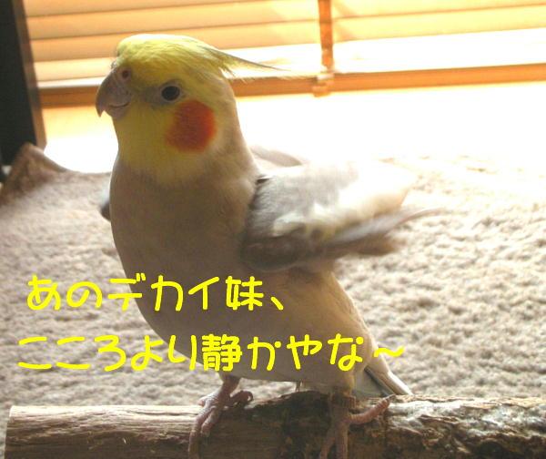 f0132055_9342096.jpg