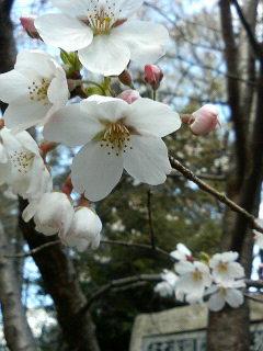 春のたより_a0075684_2156292.jpg