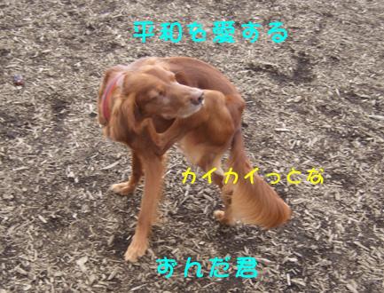 e0060693_2312112.jpg
