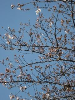 桜と着付け教室とスイーツ_a0091095_186472.jpg