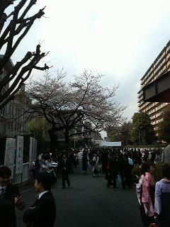 卒業式~駒大、駒小~_c0092197_2053525.jpg