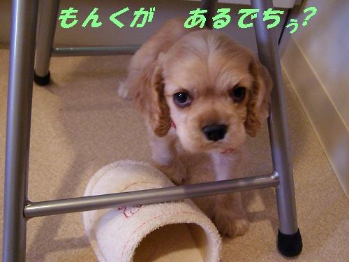 b0067012_1349529.jpg