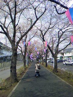 桜の下には_f0139318_2012588.jpg