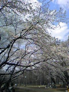 桜の下には_f0139318_20185217.jpg