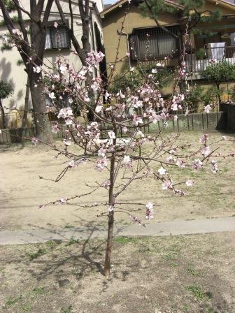 もうすぐ春ですねぇ?(その2)_b0081121_21271930.jpg