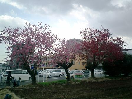 春ですね~_b0094826_17502730.jpg