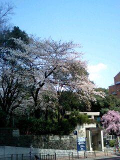 テレビ神奈川「SAKUSAKU」収録。_f0056929_20275418.jpg