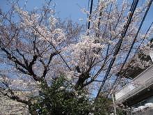 花盛り_a0068339_21392315.jpg