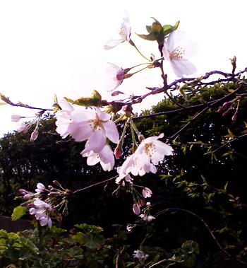 坂道、見上げれば花、そこでご飯_e0071652_21284046.jpg