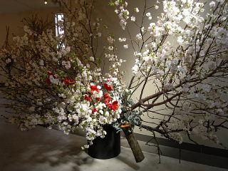 八重桜が満開_e0109554_20465044.jpg