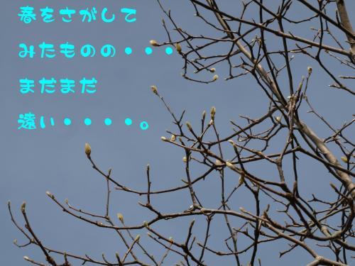 c0122897_18421810.jpg