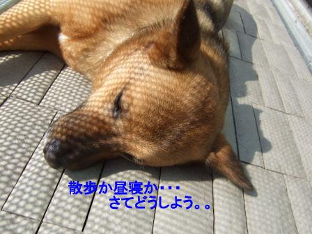 b0087400_0225253.jpg